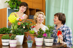 Women and girl taking care of  plants Stock Photography