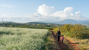 The women go on the way inside The mustard field with white flower in DonDuong - Dalat- VietNam Stock Photos