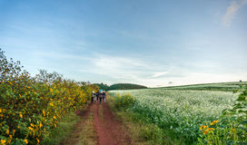 The women go on the way inside The mustard field with white flower in DonDuong - Dalat- VietNam Stock Images