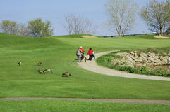 Women Golfing 2. 3 women golfing walking to the next hole royalty free stock image