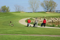 Women Golfing. 3 women golfing on a spring day royalty free stock photos