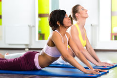 Women in the gym doing yoga exercise for fitness. Young women doing yoga and meditation in gym for better fitness, caucasian and latina people Stock Images