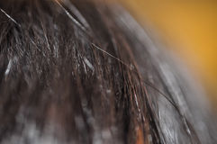 Women Hair Close Up Royalty Free Stock Images