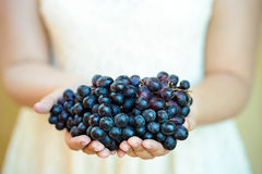 Women hand Holding a Bunch of Red Grapes Stock Photos