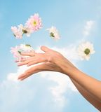 Women hands and flowers. Women hands with flying flowers against sky Stock Photography