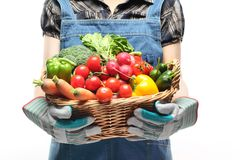 Women hands holding a basket full of vegetables royalty free stock image