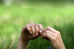 Women hands holding a blade of grass. On green defocused background stock image