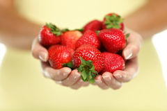 Women hands holding strawberries fruits closeup. Closeup of woman cupped hands holding many fresh strawberries. Female adult showing a handful of red berries royalty free stock images