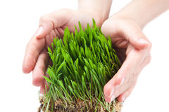 Women hands protect green grass Royalty Free Stock Photos