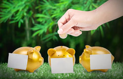 Women hands putting coin into three gold piggy bank with a Post-it taped on lawn. Close up women hands putting coin into three gold piggy bank with a Post-it Royalty Free Stock Photography
