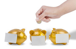 Women hands putting coin into three gold piggy bank with a Post-it taped on white background. Close up women hands putting coin into three gold piggy bank with a Royalty Free Stock Photo