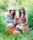Women with  harvested vegetables in garden Stock Photography