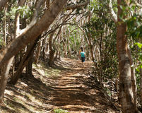 Women hiking through woods in Kauai Stock Photos