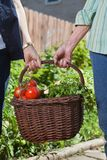 Women holding basket filled with vegetables Stock Image