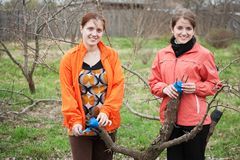Women inarching branch to tree Stock Image