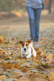 Women and Jack Russel terrier walking in the park in autumn Stock Photo