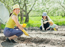 Women and kid sows seeds Royalty Free Stock Photography