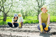 Women and kid sows seeds in soil Stock Images