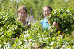 Women making birch besom Royalty Free Stock Photography