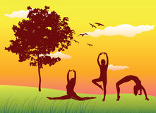 Women making gymnastics exercises on summer lawn Royalty Free Stock Photo