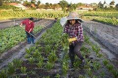 Women market gardeners at work Royalty Free Stock Photography