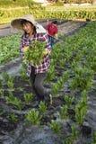 Women market gardeners at work Stock Photography