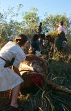 Women moving a dead cow in South Africa Royalty Free Stock Photo