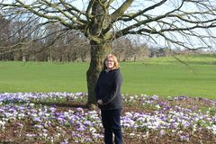Women next to a tree with plenty of blooming crocus flowers, a park in Kilkenny Ireland stock images