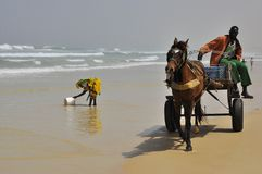 Women at the ocean and horse driven chariot Stock Image