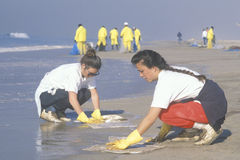 Women participating in an environmental clean up Stock Photography