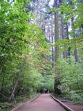 Women on pathway in Calaveras Big Trees Stock Image