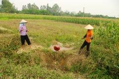 Women performing manual irrigation Stock Photo