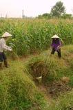 Women performing manual irrigation Royalty Free Stock Image