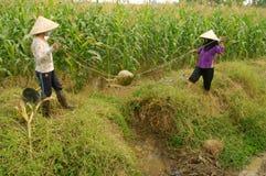 Women performing manual irrigation Stock Images