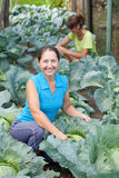 Women  in plant of cabbage Royalty Free Stock Images