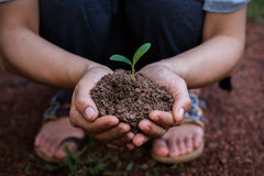Women planting trees to create a living. Royalty Free Stock Photos