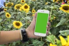 Women play Phone ,Sunflower background Royalty Free Stock Photos