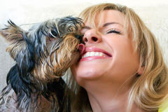 Women plays with a puppy of a terrier Stock Photos