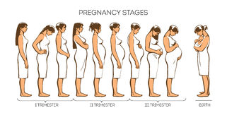 Women Pregnancy Stages. Stages of pregnancy, different women at different stages of pregnancy, vector illustration sketch hand-drawn style, types of trimesters Stock Photography