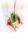 Women protect sprouts grass on white background Royalty Free Stock Photography