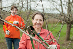 Women pruned branches in the orchard Royalty Free Stock Photos
