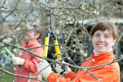 Women pruned branches in the orchard Royalty Free Stock Images