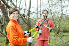 Women pruning  tree in  orchard Royalty Free Stock Photography