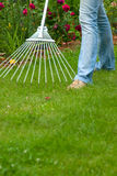 Women raking Royalty Free Stock Photo