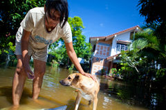 Women rescue dog from flood Royalty Free Stock Image