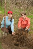 Women resetting  bush sprouts Stock Image