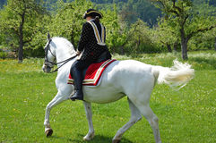 Women riding Andalusian horse. Woman dressed in spanish national clothes is riding a graceful white Andalusian horse surrounded by vivid green nature. Andalusian Royalty Free Stock Photography