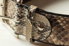 Women's belt leather snake. Beautiful female snake leather strap Royalty Free Stock Photo
