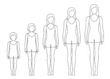 Women`s body proportions changing with age. Girl`s body growth stages. Vector contour illustration. royalty free stock photography
