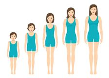 Women`s body proportions changing with age. Girl`s body growth stages. Royalty Free Stock Images